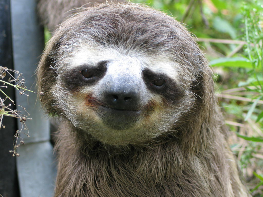 Why Sloths Are Cute | dwsedona